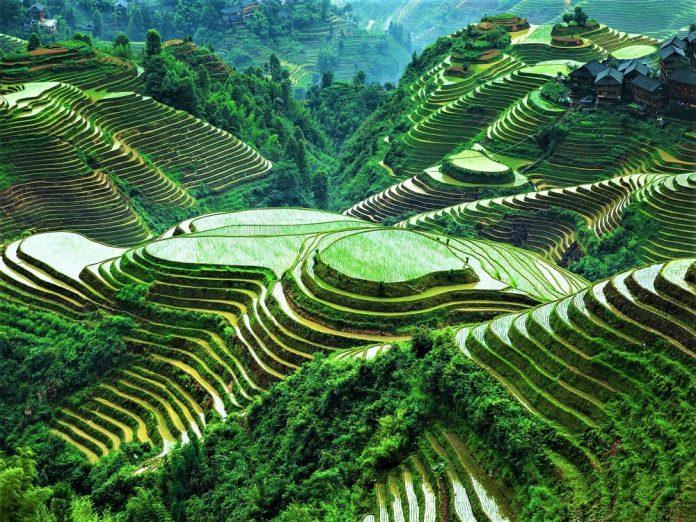 Filipina, Banaue Rice Teras