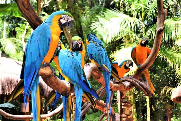 Bali Bird Park, photo by AdventureTravel