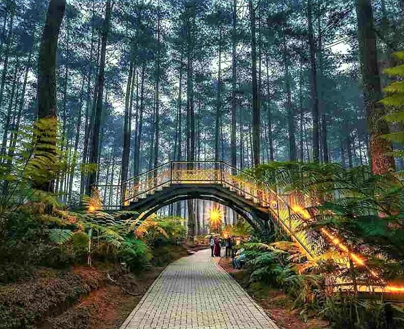 Orchid Forest Cikole, Hutan Pinus dengan Desain Kekinian | Indonesia  Traveler