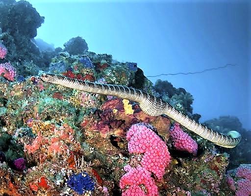 Teluk Belongas