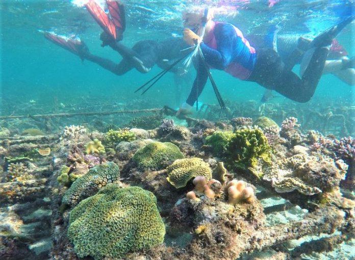 Taman Bawah Laut Buatan di Bali