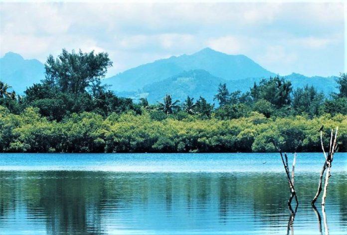 Hutan Mangrove Gili Meno