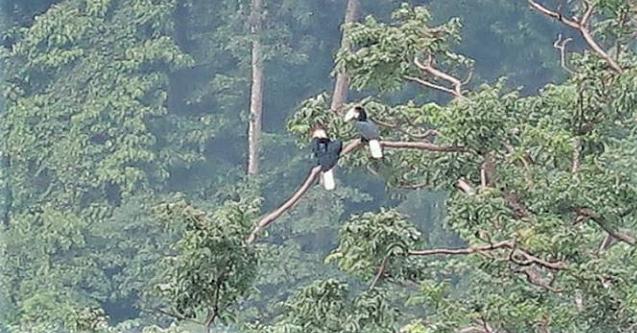 Taman Wisata Alam Sibolangit