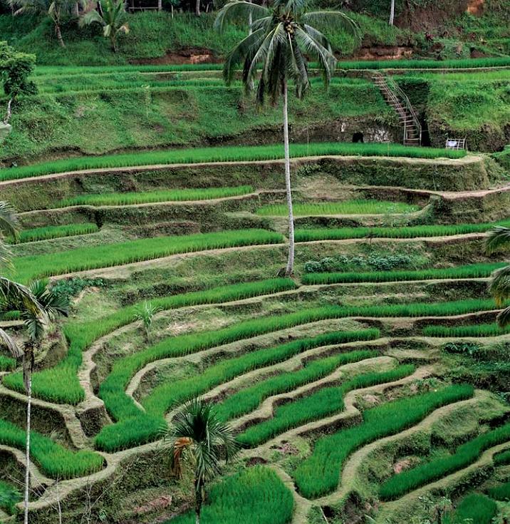 Pesona Ubud, Bali