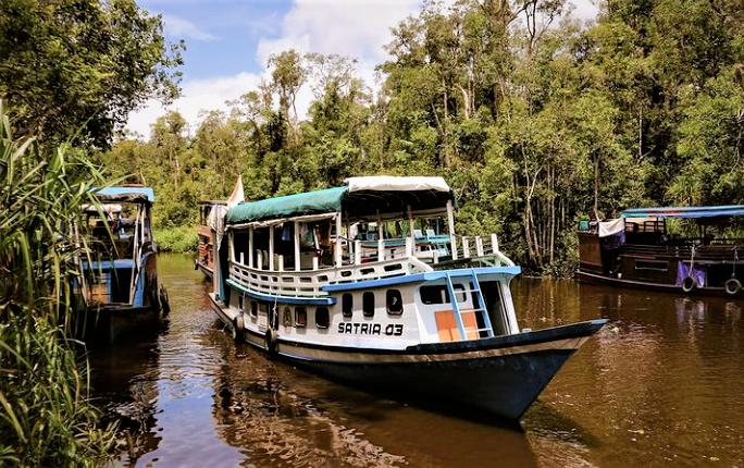 Wisata Susur Sungai Sekonyer yang Mengasyikkan!