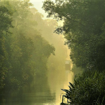 Kalimantan Tengah, Sungai Sekonyer, Photo by @wiraseto