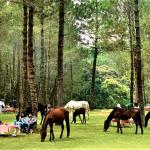 Bandung, Jungle Milk6
